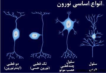 سلول های نورونی مغز
